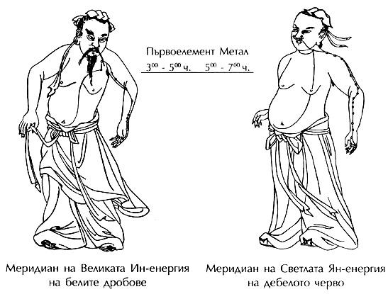 меридиани на белите дробове и дебелото черво