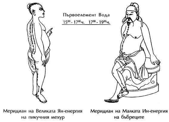 меридиани на бъбреците и пикочния мехур