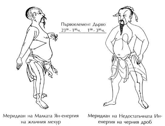 меридиани на черния дроб и жлъчката