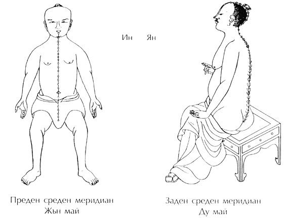 преден среден и заден среден меридиан